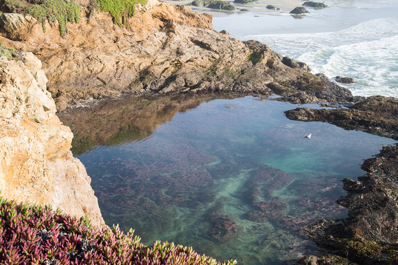 Tidepool near Fort Bragg